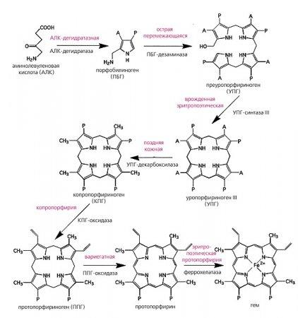 biosintez