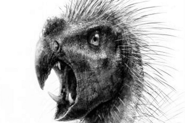 The parrot-faced dwarf dinosaur Pegomastax